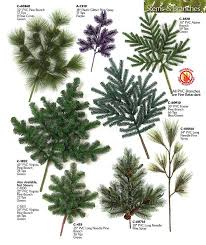 151 best trees images on botanical drawings botanical