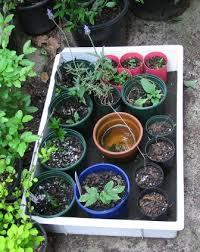 Diy Self Watering Herb Garden Self Watering Tray Deep Green Permaculture