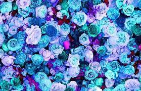 blue and purple flowers blue blue flowers flower flowers pink pink flowers purple
