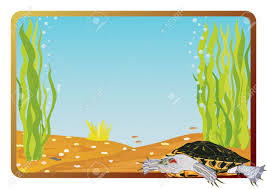 marine life on background frame with the underwater scenery