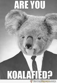 Koala Bear Meme - funny meme with a guy who has koala head