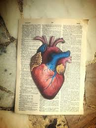 the 25 best anatomical heart ideas on pinterest anatomical