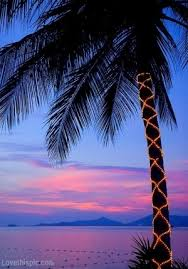 palm tree lights pictures photos and images for