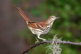 South Carolina birds images South carolina birds chas mcrae photography jpg