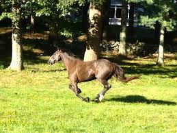 ferrari horse vs mustang horse august 2013 u2013 equine ink