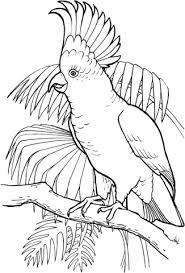 parrots coloring pages sulfur crested cockatoo coloring page animal 50 best pictures