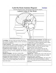 label the brain anatomy diagram human brain diagram labeled