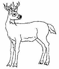 coloring pages of animal footprints footprints coloring page free