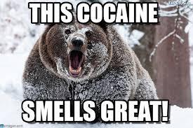 Bear Cocaine Meme - this cocaine i fucking love cocaine bear meme on memegen