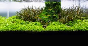 Best Substrate For Aquascaping Aquascaping With A Shallow Aquarium U2014 Practical Fishkeeping Magazine