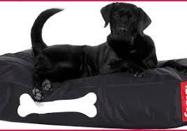 canapé pour chien grande taille tapis pour chien grande taille 208096 canape pour chien canape pour