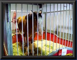 Budweiser Clydesdale Barn My Quality Time The Budweiser Clydesdales At The Fairfield County