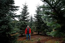 granite falls christmas tree farmer in it for love not money