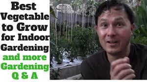 best vegetable to grow for indoor gardening u0026 more organic