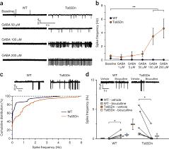 reversing excitatory gabaar signaling restores synaptic plasticity
