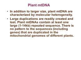 mitochondrial dna in molecular systematics organelle found in