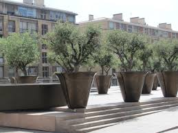 large potted trees search terrace