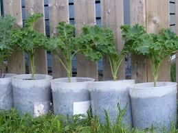 flower gardening 101 potted herbs halifax garden network