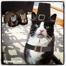 funny animal thanksgiving pictures gratitude momsieblog