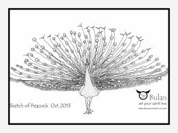peacock drawing sketch draw8 info