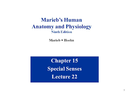 Fundamentals Of Anatomy And Physiology 9th Edition Download Anatomy And Physiology Ppt Download