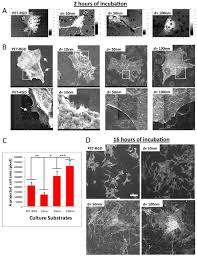 altered nanofeature size dictates stem cell differentiation