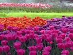 ดอกไม้สวยๆ | nawindar.wordpress.com