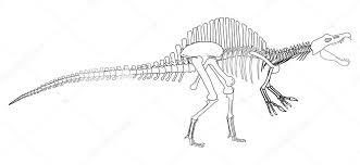 dinosaur skeleton u2014 stock photo ajlber 5866865