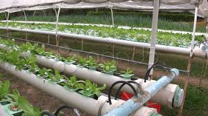 Hydroponics Vegetable Gardening by Hydroponic Farm Garden Vegetable Cultivation Crop Agricultural