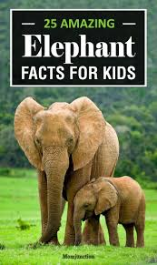 best 25 elephant facts for kids ideas on pinterest animal fun