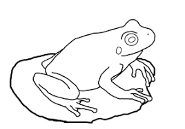 tadpole coloring page amphibian and reptile coloring pages