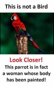 Parrot Meme - dopl3r com memes this is not a bird look closer this parrot is
