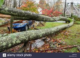 chappaqua n y chappaqua ny usa 30 oct 2012 the day after hurricane force