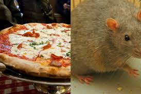rat cuisine the pizza rat taste test which york slice do big city vermin