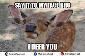 Oh Deer Meme - deer memes