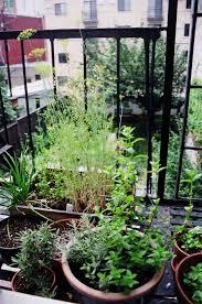 Urban Herb Garden Ideas - 38 best fire escape plants images on pinterest fire escape
