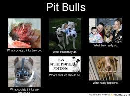 What We Think We Do Meme - dogs eating cat poop harmful all about pit bulls book