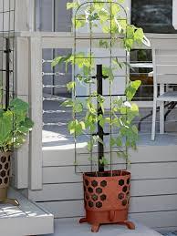 gardener u0027s revolution u0027 vine planter with trellis gardeners com