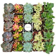 succulents cactus plants garden plants flowers the home depot