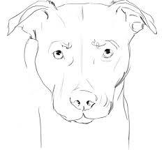 anatamation where anatomy meets animation dog anatomy