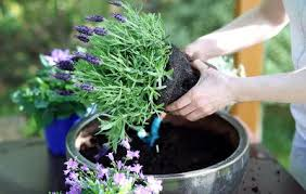 everything you need to know about container gardening rodale u0027s
