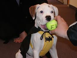7 games to make your pup u0027s halloween bash the best on the block