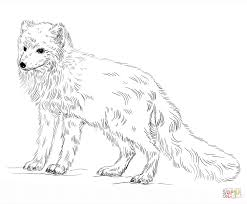 arctic fox coloring page free printable coloring pages