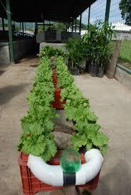 indoor vegetable gardening tips zandalus net