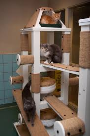 Cat Gyms Transform Your Interior Into A Cat Friendly Environment Bloglet Com