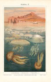 By Hanging 1898 Shower Curtain For Sale By Science Source 100 Best Jel Images On Pinterest Marine Life Science