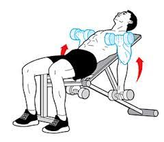 Incline Bench Muscle Group Top 5 Exercises To Increase Bicep Size U2013 Getting Shredded