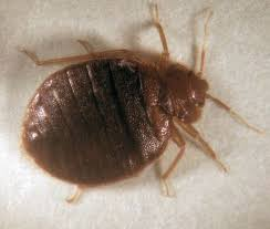 I Found A Bed Bug Now What 35 Best Bed Bug Awareness Week Images On Pinterest 3 4 Beds Bed