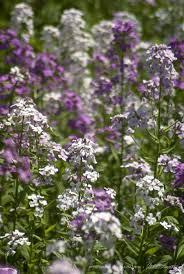 25 best flowers images on pinterest flowers flower gardening