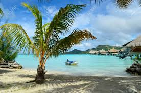 a beach and a palm tree in a luxury overwater thatched roof